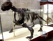 Paleontology. Dinosaur